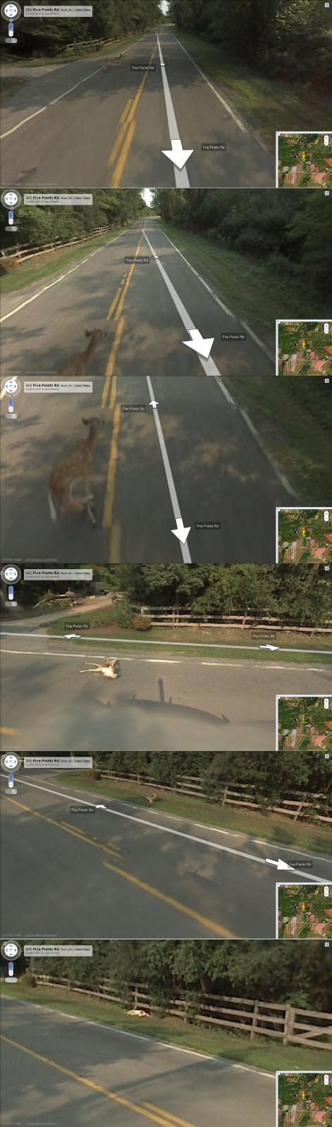 El carro de Google Maps arroya un venadito